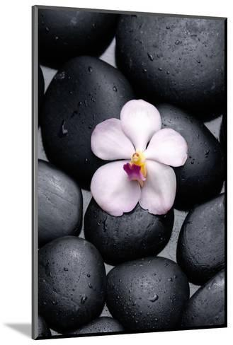 White Orchid with Therapy Stones-crystalfoto-Mounted Photographic Print