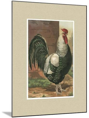 Roosters with Mat IV-Cassel-Mounted Art Print