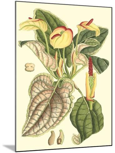 Botanical Fantasy III--Mounted Art Print