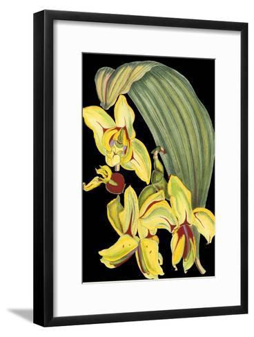 Tropical Plant on Black I--Framed Art Print
