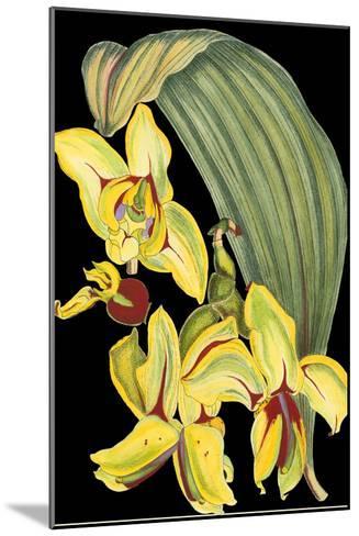 Tropical Plant on Black I--Mounted Art Print