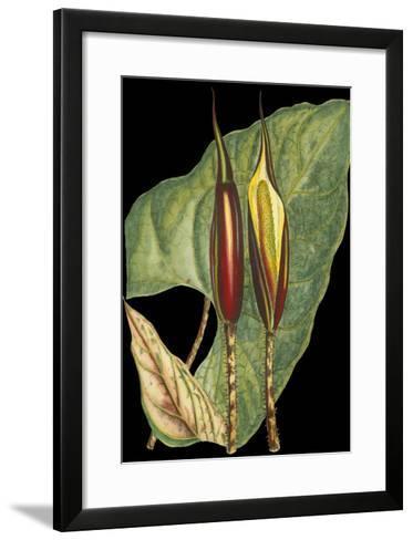 Tropical Plant on Black IV--Framed Art Print