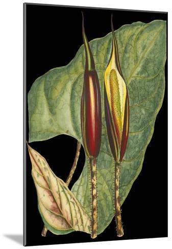 Tropical Plant on Black IV--Mounted Art Print