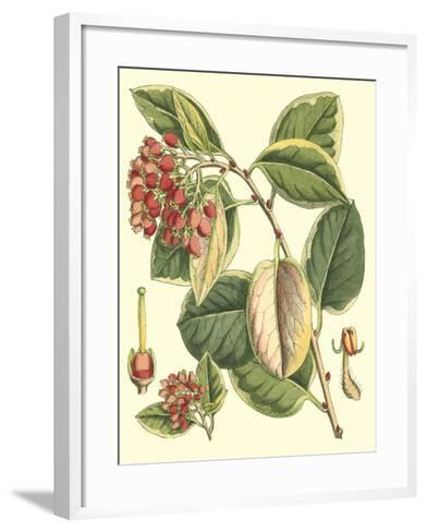 Botanical Fantasy IV--Framed Art Print