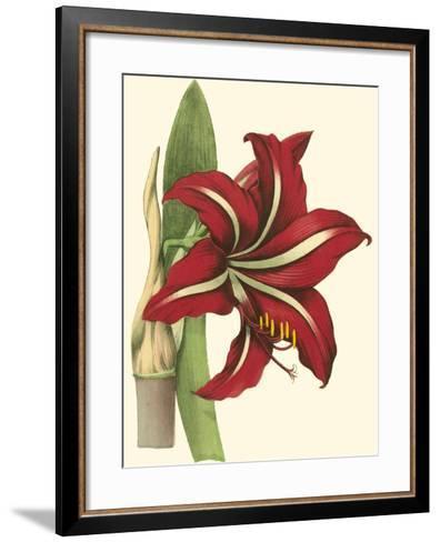 Amaryllis I-Cooke-Framed Art Print