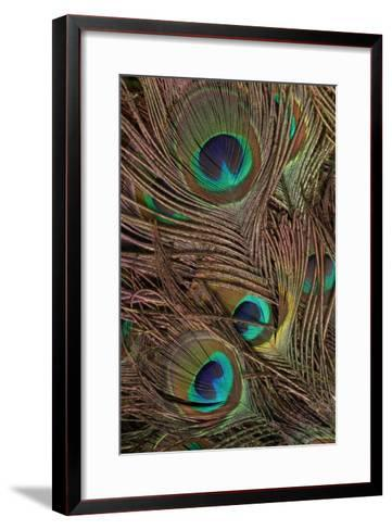 Peacock Feathers IV-Vision Studio-Framed Art Print