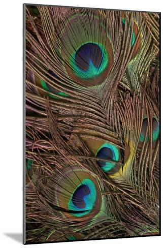 Peacock Feathers IV-Vision Studio-Mounted Art Print