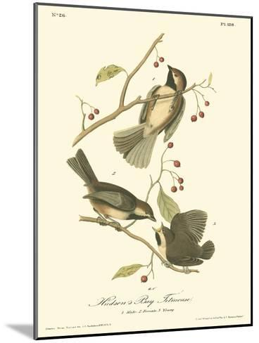 Hudson's Bay Titmouse-John James Audubon-Mounted Art Print