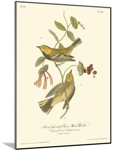 Black-throated Green Wood Warbler-John James Audubon-Mounted Art Print