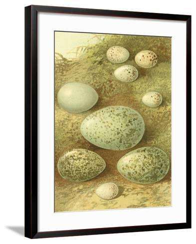 Bird Egg Collection II-Vision Studio-Framed Art Print