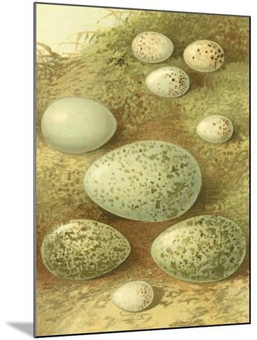 Bird Egg Collection II-Vision Studio-Mounted Art Print