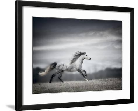 Wind Blown Mane II-PHBurchett-Framed Art Print