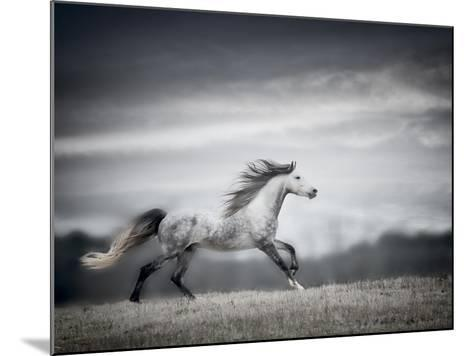 Wind Blown Mane II-PHBurchett-Mounted Art Print