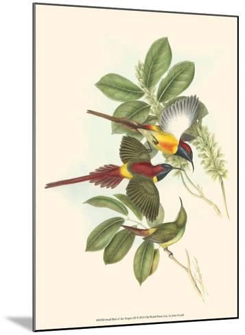 Small Bird of the Tropics III-John Gould-Mounted Art Print