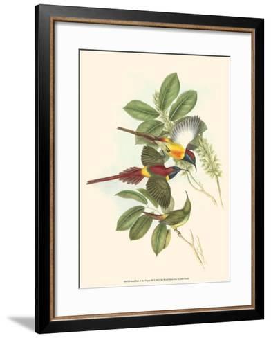 Small Bird of the Tropics III-John Gould-Framed Art Print