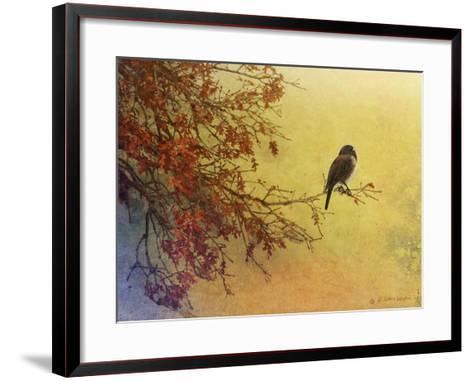 Snow Oak Junco-Chris Vest-Framed Art Print