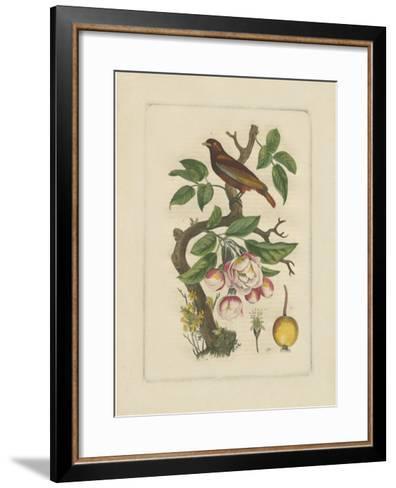 Exotic Bird and Botanical II--Framed Art Print