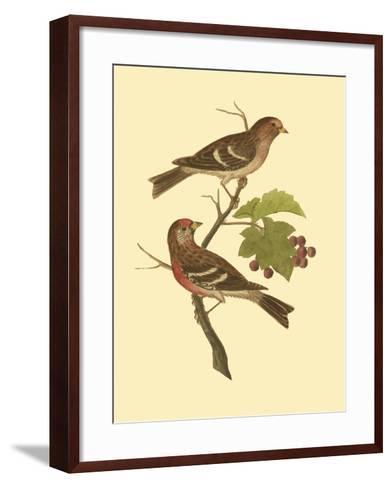 Antique Bird Pair II-James Bolton-Framed Art Print