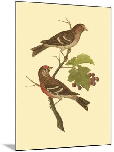 Antique Bird Pair II-James Bolton-Mounted Art Print
