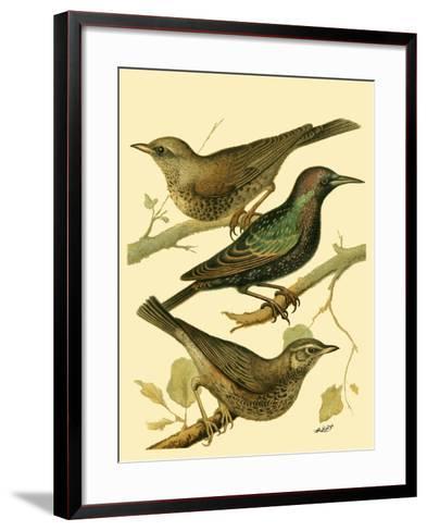 Domestic Bird Family IV-W^ Rutledge-Framed Art Print