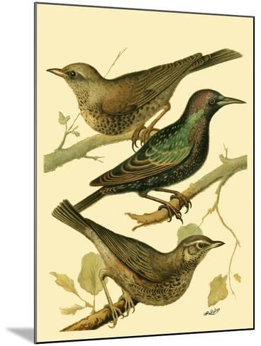 Domestic Bird Family IV-W^ Rutledge-Mounted Art Print