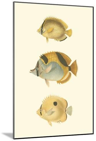 Antique Tropical Fish I-Vision Studio-Mounted Art Print