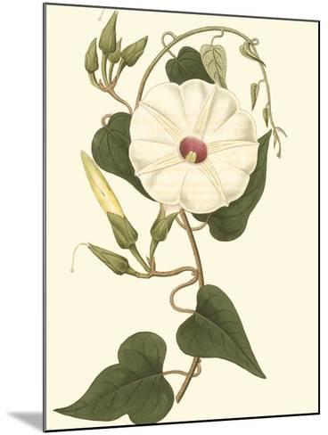 Blossoming Vine I-Sydenham Teast Edwards-Mounted Art Print