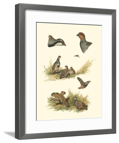 Partridge--Framed Art Print
