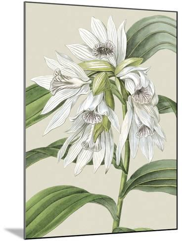 Small Orchid Blooms III-Vision Studio-Mounted Art Print