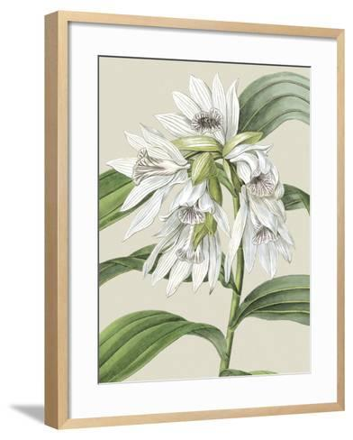 Small Orchid Blooms III-Vision Studio-Framed Art Print