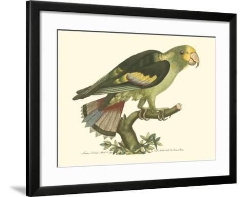 Black-Winged Parakeet--Framed Art Print