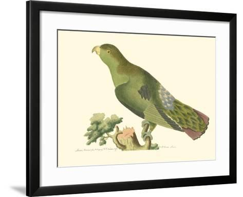 Purple-Tailed Parakeet--Framed Art Print