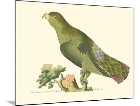 Purple-Tailed Parakeet--Mounted Art Print