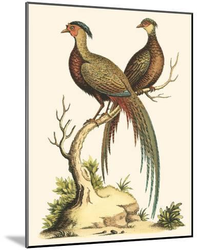 Small Regal Pheasants II-George Edwards-Mounted Art Print