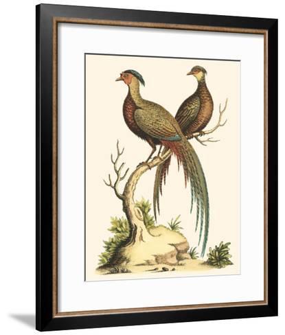 Small Regal Pheasants II-George Edwards-Framed Art Print