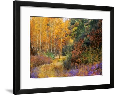 Lost Canyon Larkspurs I-Chris Vest-Framed Art Print