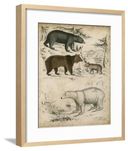 Non-Embellished Species of Bear--Framed Art Print