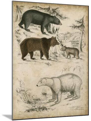 Non-Embellished Species of Bear--Mounted Art Print