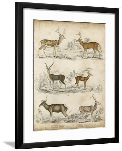 Non-Embellished Species of Deer--Framed Art Print