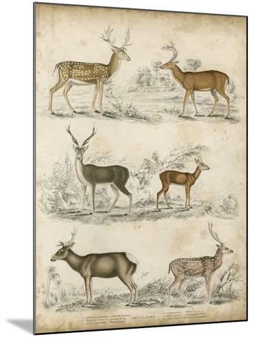 Non-Embellished Species of Deer--Mounted Art Print