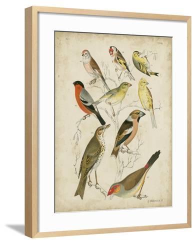 Non-Embellished Avian Gathering II-G^ Lubbert-Framed Art Print