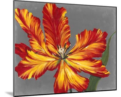 Tulip Portrait II-Tim O'toole-Mounted Art Print