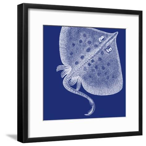 Saturated Sea Life III-Vision Studio-Framed Art Print