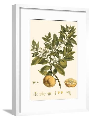 Small Miller's Bounty I-John Miller-Framed Art Print