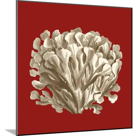 Small Coral on Red III-Vision Studio-Mounted Art Print