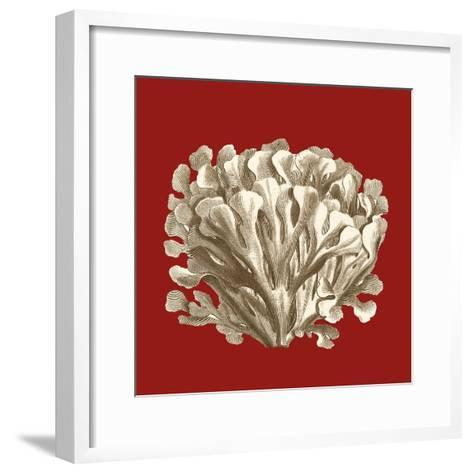 Small Coral on Red III-Vision Studio-Framed Art Print