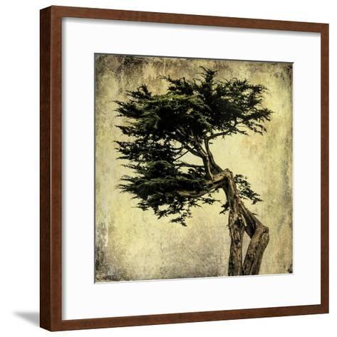Grand Cypress-Honey Malek-Framed Art Print