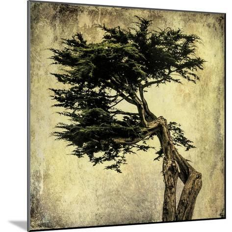 Grand Cypress-Honey Malek-Mounted Art Print