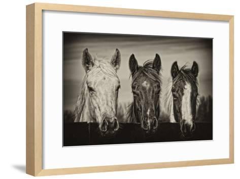 Three Amigos I-PHBurchett-Framed Art Print