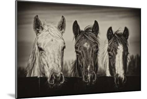 Three Amigos I-PHBurchett-Mounted Art Print